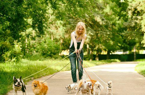 siti per trovare un dogsitter