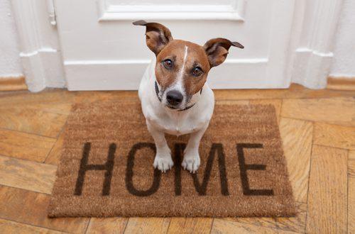 evitare che il cane solo in casa faccia danni