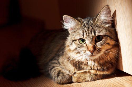 festa nazionale gatto l'animale domestico più amato