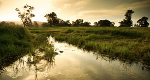giornata mondiale zone umide