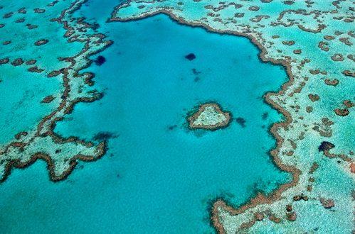 La Grande Barriera Corallina: un ecosistema da 42 miliardi di dollari da salvaguardare