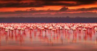 Fenicotteri rosa: il nuovo trend dell'estate!