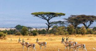 Defaunazione antropocentrica: è in corso la sesta estinzione di massa