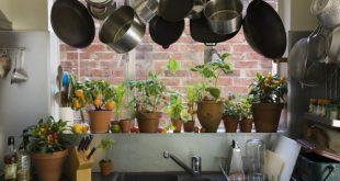 """""""Dal piatto alla pianta"""": l'economia circolare a chilometri zero"""