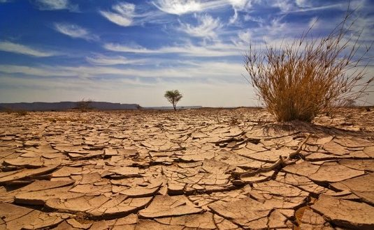 """FAO: """"La carestia è un fallimento: la gente è vittima della fame"""""""