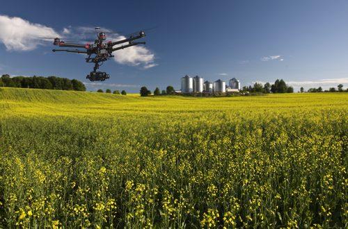 Selvicoltura di precisione: arrivano droni e satelliti per il verde urbano