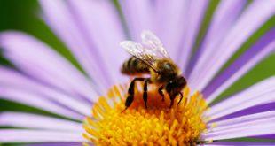 Armageddon ecologico: scomparsi tre quarti degli insetti alati
