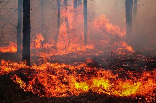 Incendi in Val Susa: un incubo durato otto giorni