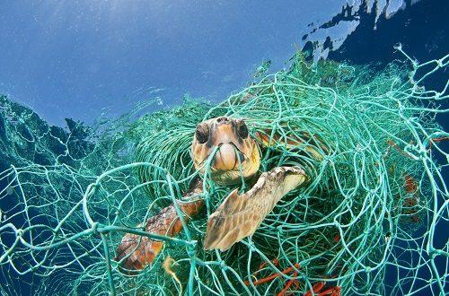 Marine litter: l'impatto delle microplastiche sulle specie animali mediterranee