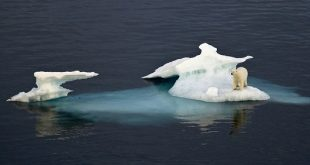 """Planet is calling"": la nuova campagna lanciata dal WWF"