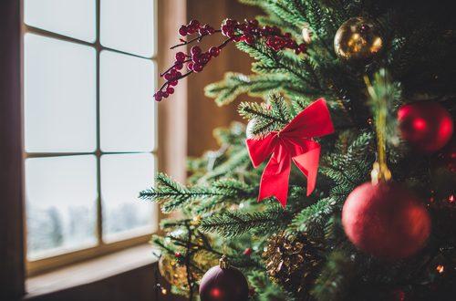 Natale 2017 gli italiani vogliono l 39 albero vero for Albero di natale vero
