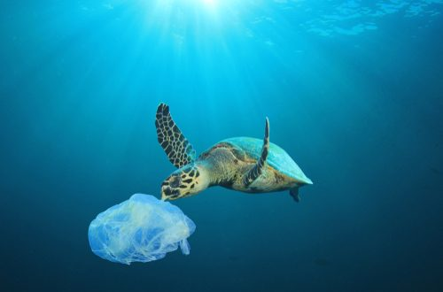 UE per l'ambiente: nuove norme per 10 prodotti in plastica monouso